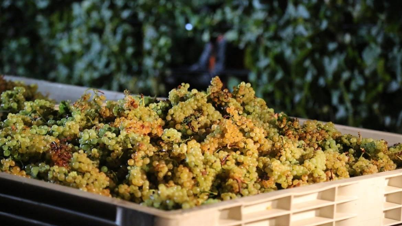 Harvest: report Italy September 2020