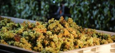 Harvest: report Italy September 2020
