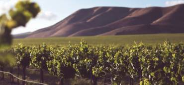 Crop 2021: Australia, Argentina, Chile