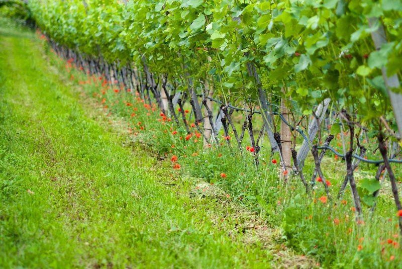 Wine Market Report – Flowering – June 2021
