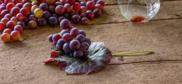 Italy: harvest 2021