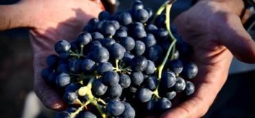 Harvest 2021 Report